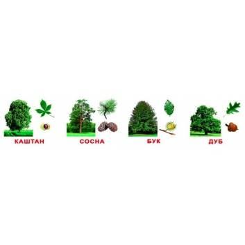 Книги и развитие, Набор обучающих карточек Деревья с фактами 20 шт Вундеркинд с пелёнок 222907, фото