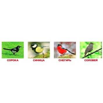Книги и развитие, Набор обучающих карточек Птицы 20 шт Вундеркинд с пелёнок , фото
