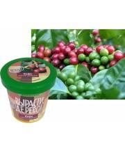 Набор для выращивания растений Кофе арабский Вырасти, дерево!