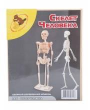 Сборная модель Скелет человека Мир деревянных игрушек