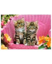 Пазлы 1000 Котята на стуле Кастор