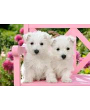 Пазлы 1500 Два белых щенка Кастор