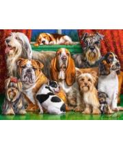 Пазлы 3000 Собаки Кастор