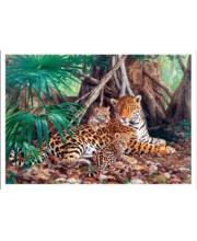 Пазлы 3000 Ягуары в джунглях Кастор