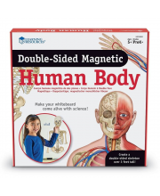 Набор магнитов Человеческое тело
